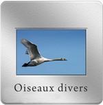 diapo_oiseau_divers