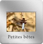 diapo_petite_bete