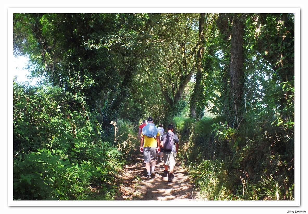 Chemin creux à Avrillé