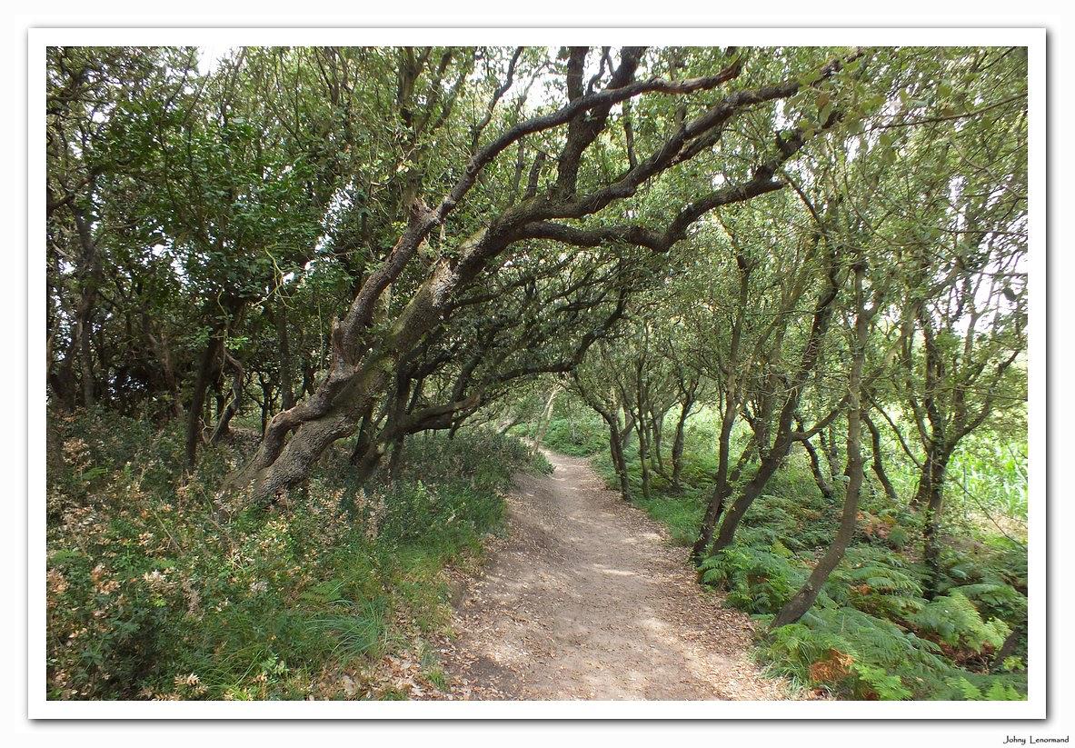 Chemin entre les chênes verts en forêt de Jard sur Mer