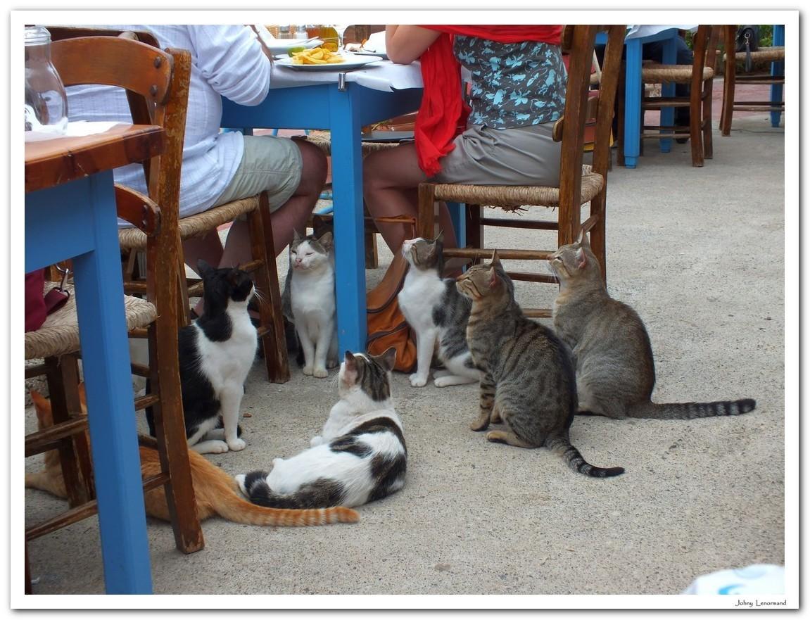 Chats en Crète