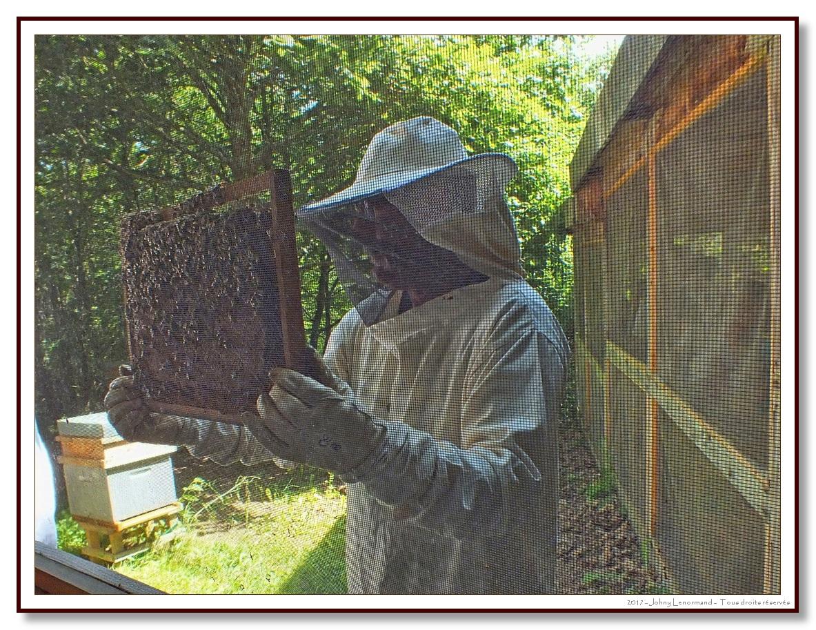 La Folie de Finfarine - Dans le rucher