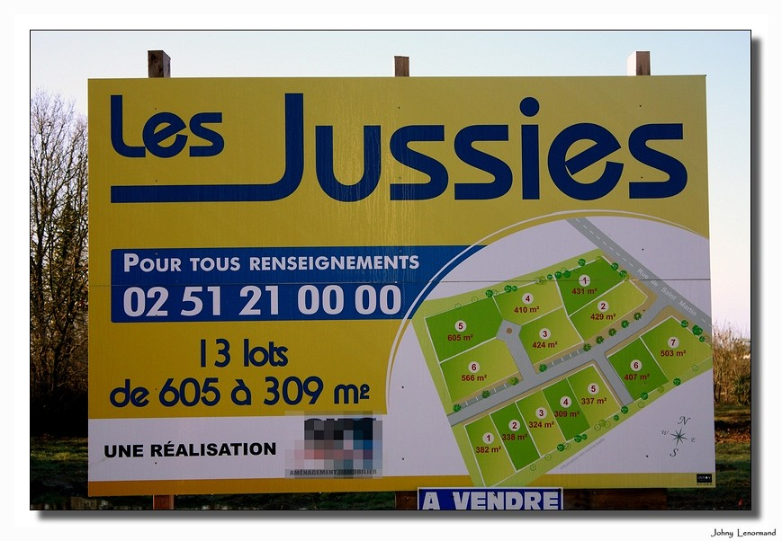 Les jussies