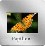 diapo_papillon