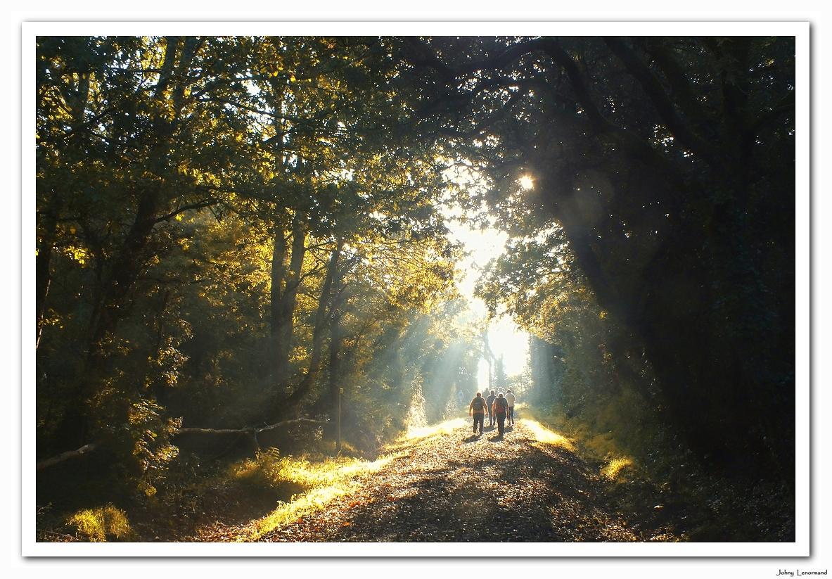 Dans les bois de Saint Hilaire la Forêt