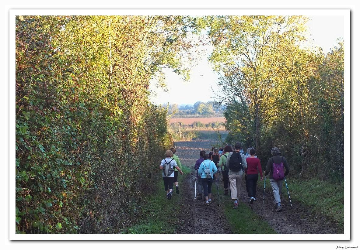 Chemin à Saint Hilaire le Forêt