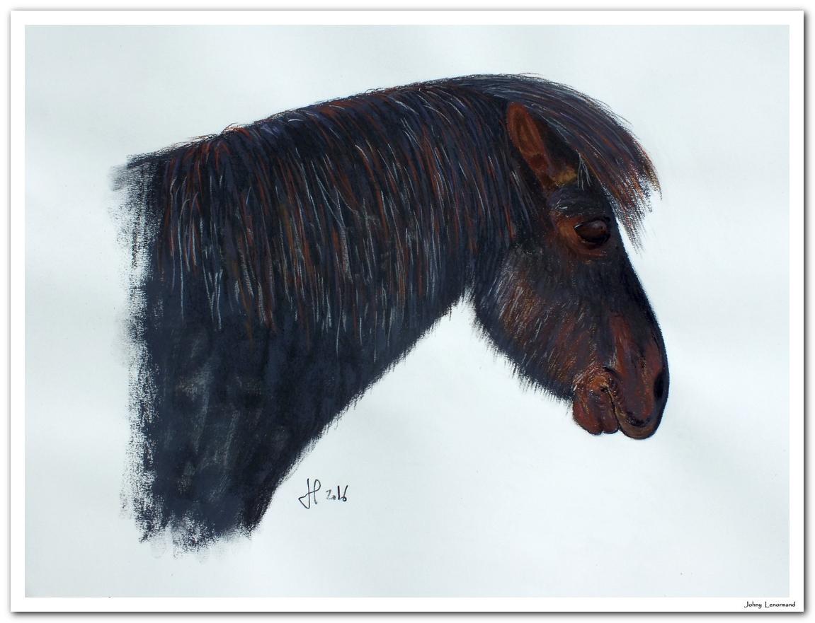 Bubu, shetland de la famille