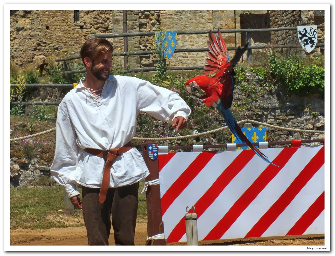 """Spectacle """"Les faucons d'Aliénor"""" à Talmont Saint Hilaire (Vendée)"""