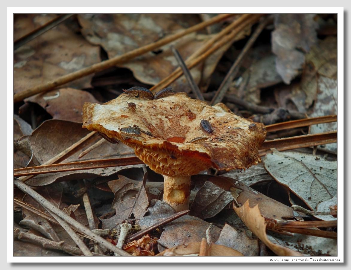 Sortie mycologique en forêt du Veillon