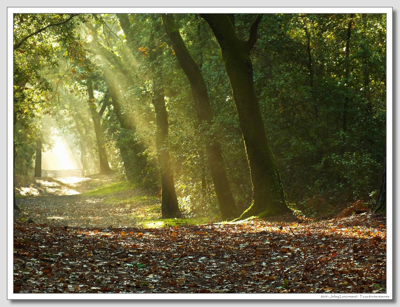 Dans le bois du Veillon