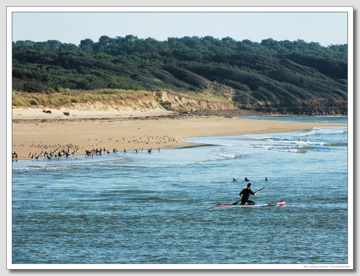 Migrateurs au bord du Payré, Talmont Saint Hilaire, Vendée