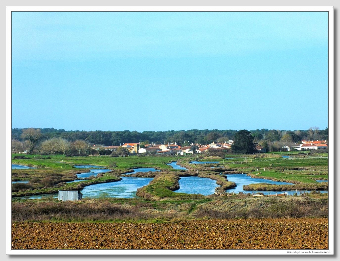 Dans les marais de la Guittière à Talmont en Vendée