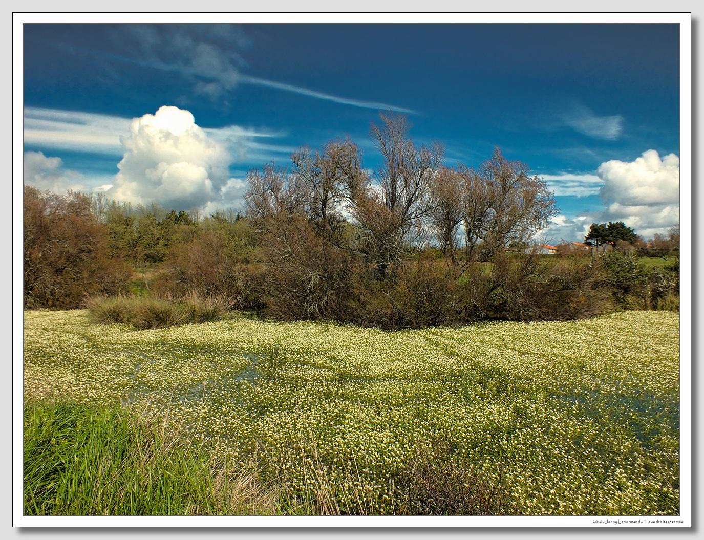 Ciel de traine sur le Grand Marais de la Guittière à Talmont St Hilaire (Vendée)