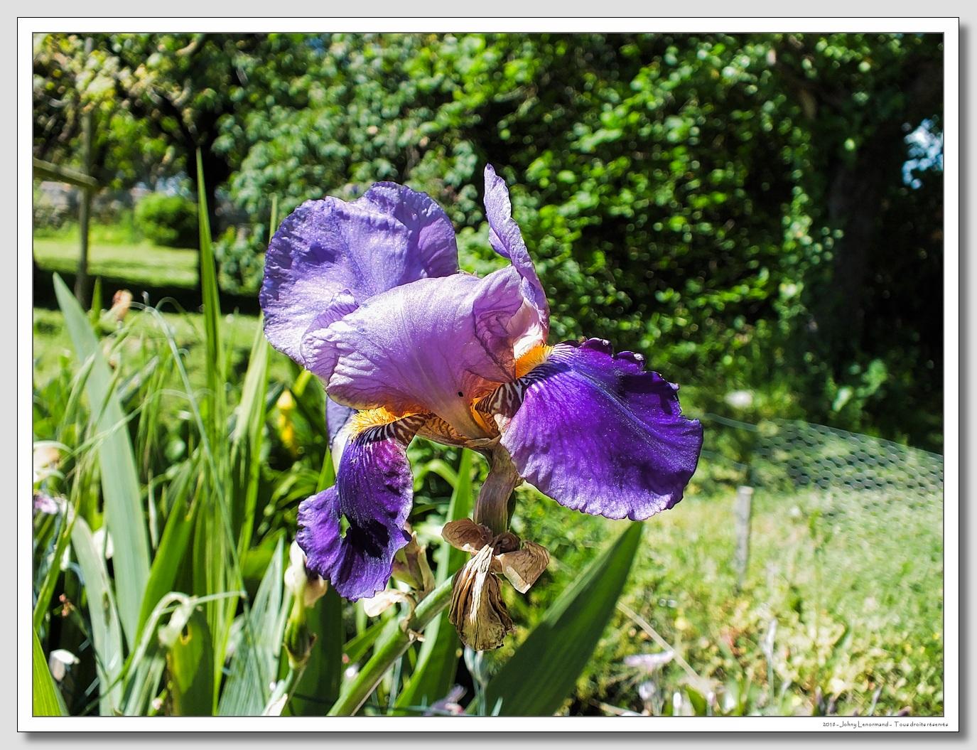 Dans le jardin au mois de mai
