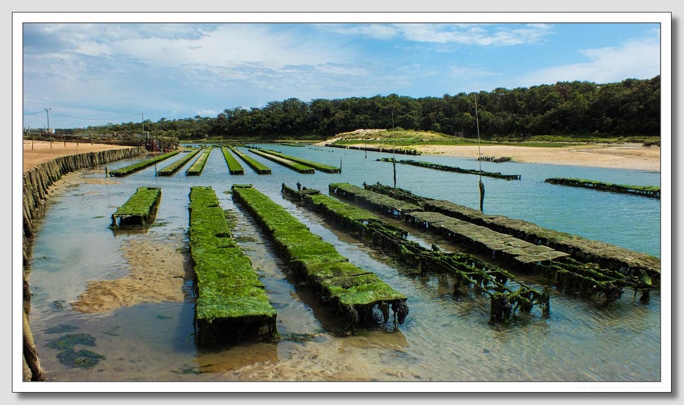 Parc ostréicole au Port de la Guittière à Talmont Saint Hilaire (Vendée)