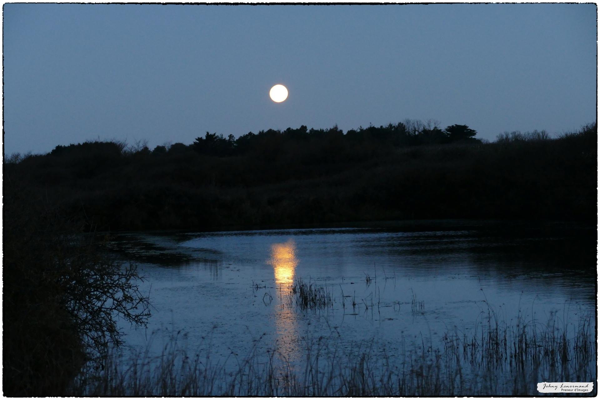 Coucher de lune sur le marais