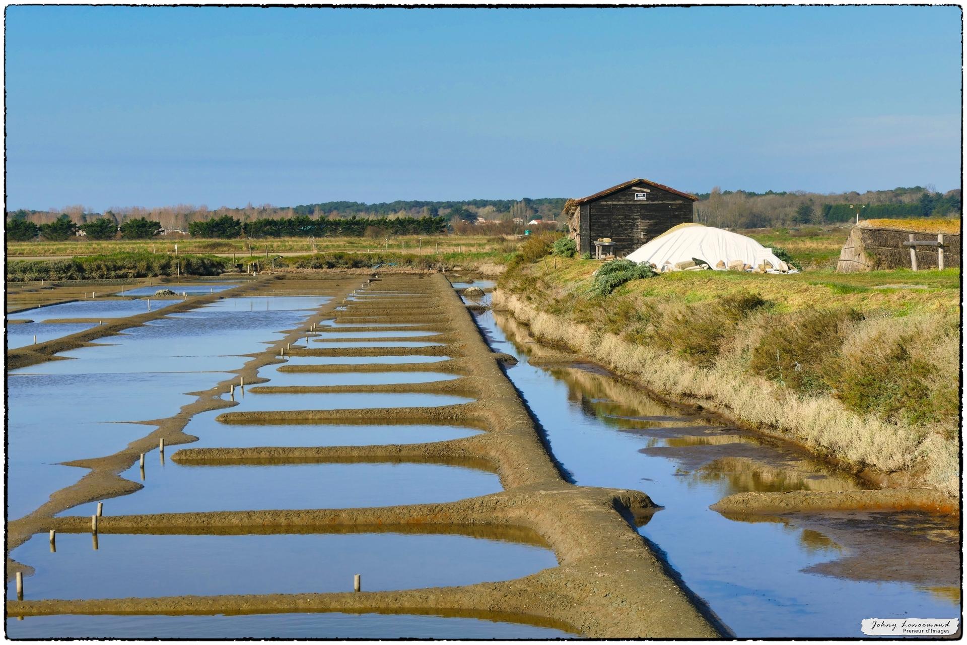 Marais de l'Ile d'Olonne (Vendée)