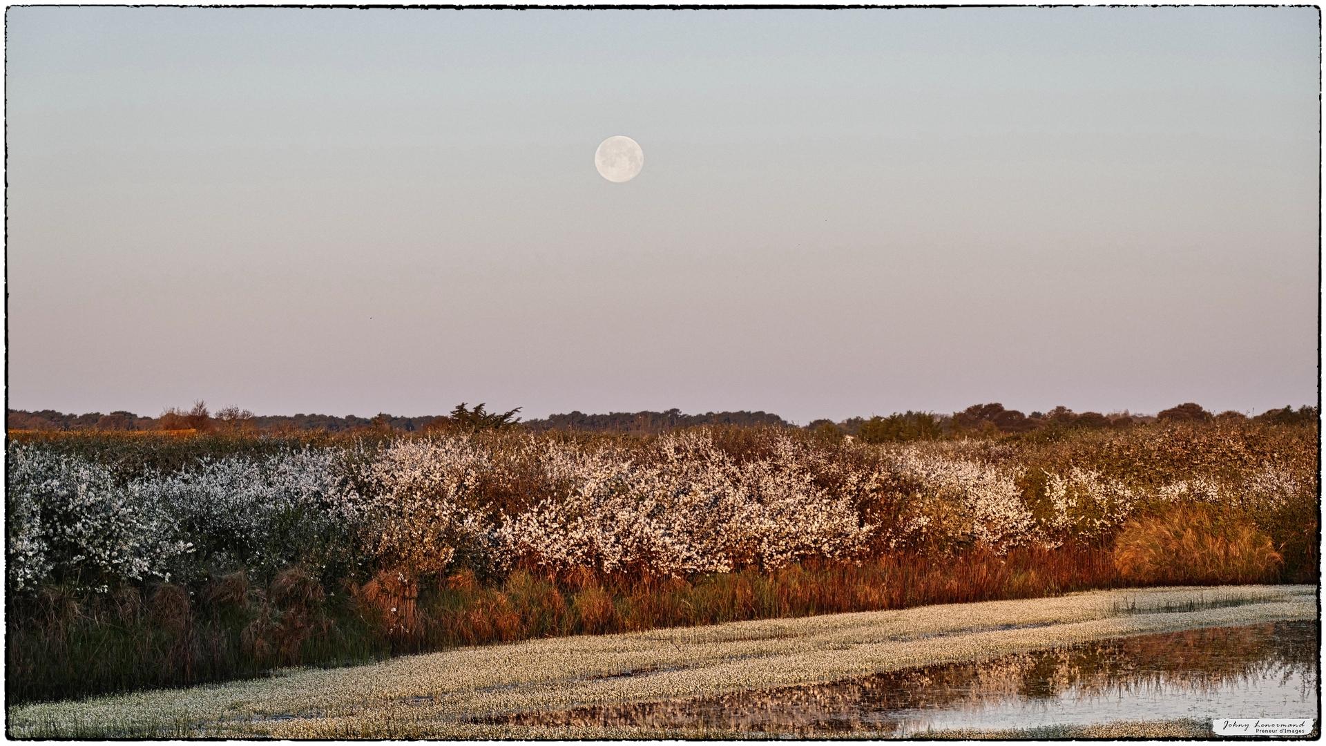 Clair de lune sur le marais de la Guittière