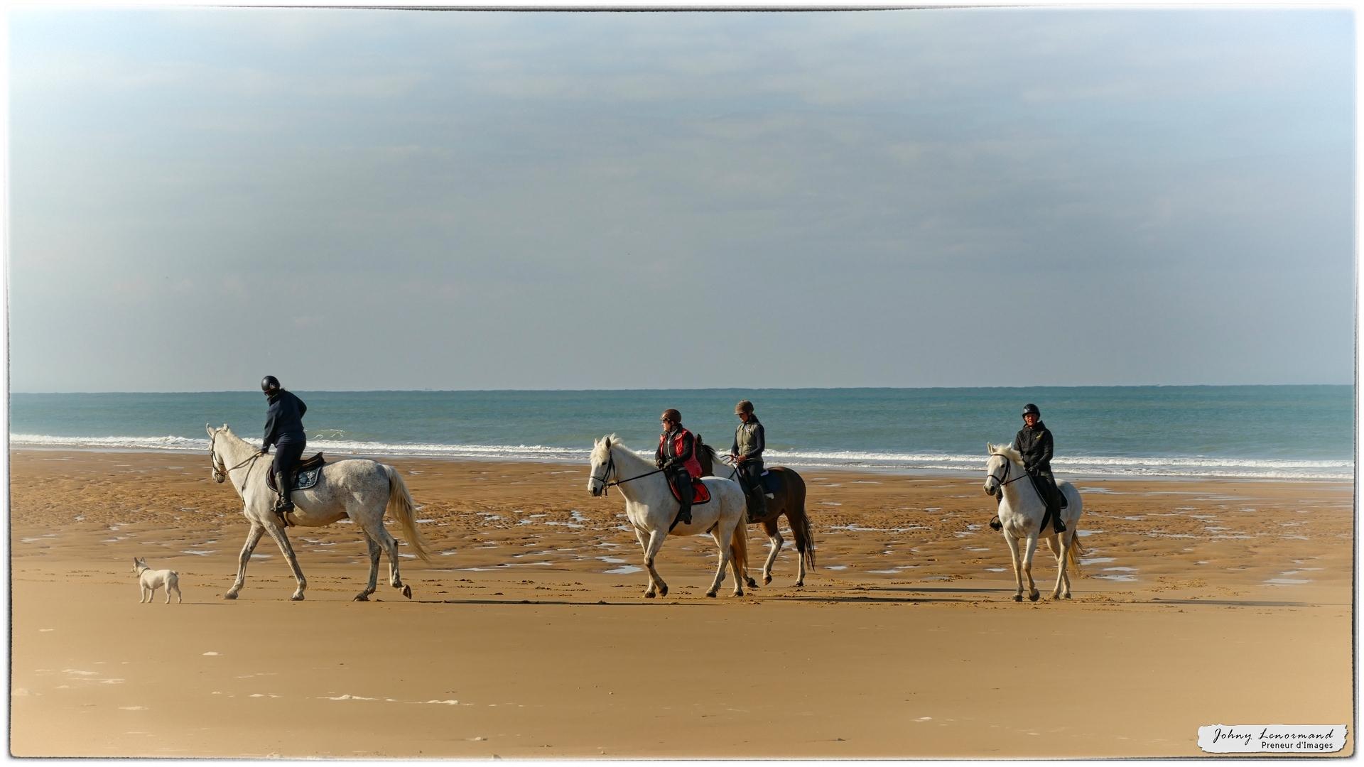 Chevaux sur la plage du Veillon à Talmont St Hilaire (Vendée)